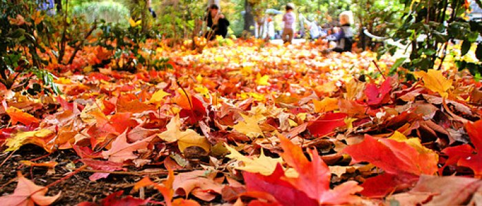fall-clean-up-leaf-removal