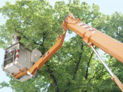 tree-triming-boom-truck